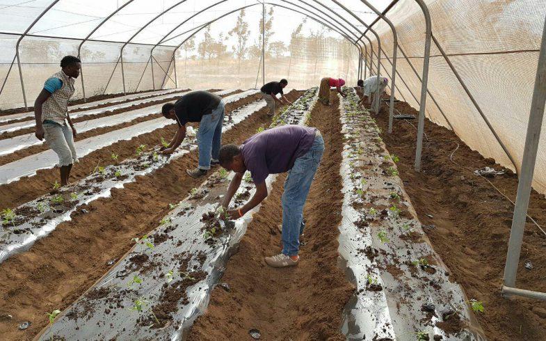 Greenhouse Mpya – Dege Kigamboni